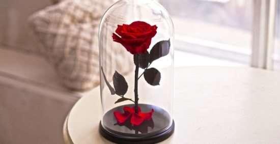 Розы в колбе – оригинальный и практичный подарок к любому случаю