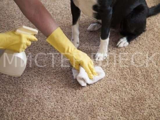 Чем с ковра вывести запах собачьей мочи