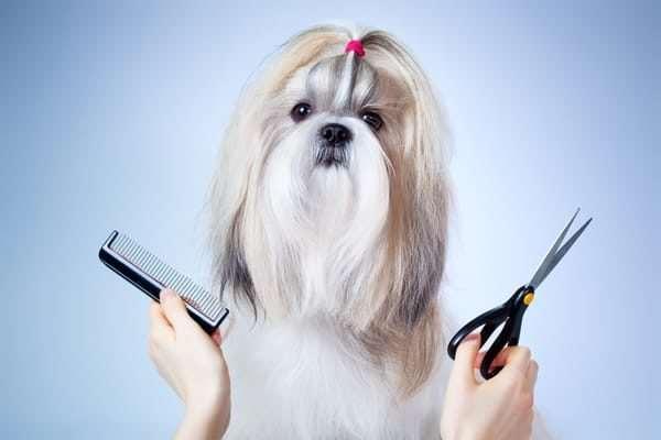Груминг для собак и кошек – отличный способ сделать питомца красивым