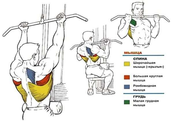 Как правильно выполнять упражнения на спину в спорт-зале