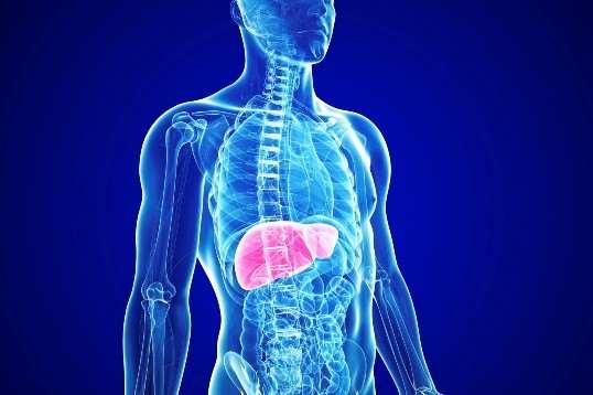 Развитие и диагностика аутоиммунного гепатита