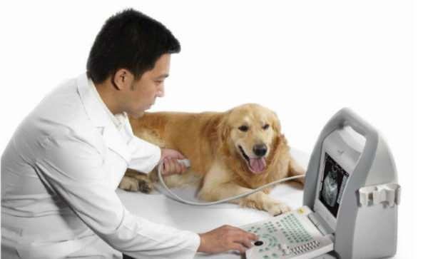 В каких случаях домашним любимцам может понадобиться ветеринарная помощь?
