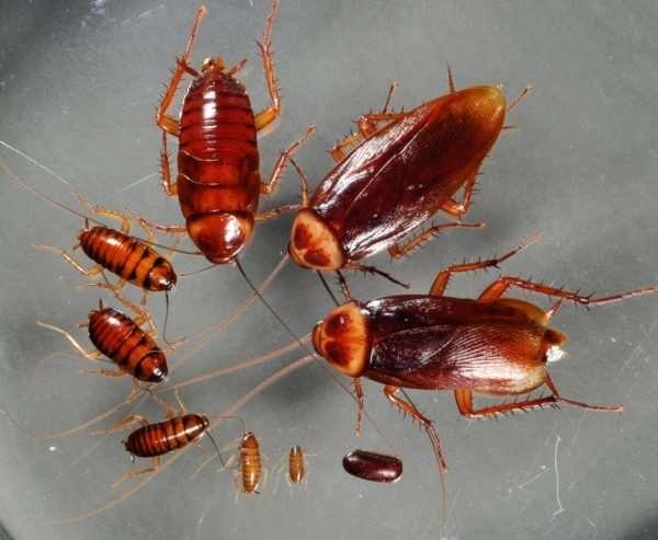 Современные методы для борьбы с тараканами в городской квартире