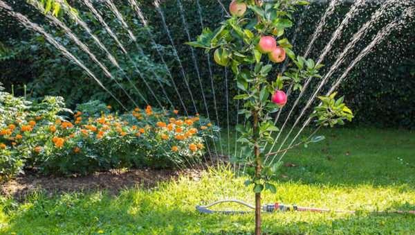 Как выбрать самые лучшие саженцы деревьев для своего сада?