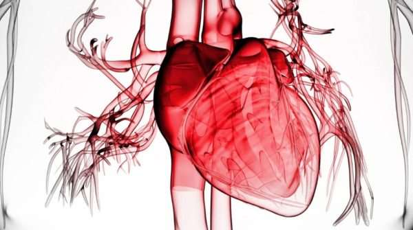 Особенности замены митрального и аортального клапанов сердца