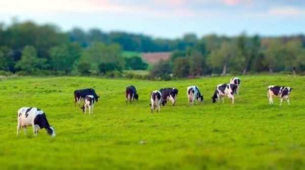 Мировые проблемы и тенденции развития животноводства