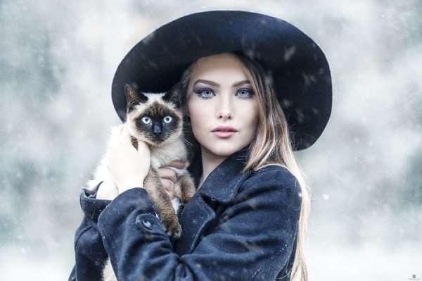 Домашняя кошка – полезный и нежный питомец