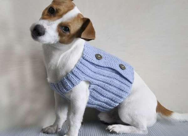 Одежда для собак – залог комфорта для любимого питомца