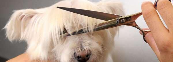 Почему длинношерстных собак необходимо подстригать?