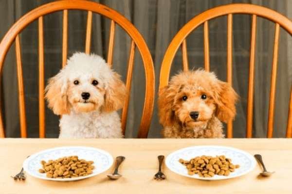 О важности подбора полезного корма для собак