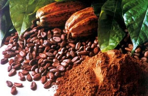 Польза для здоровья натурального какао