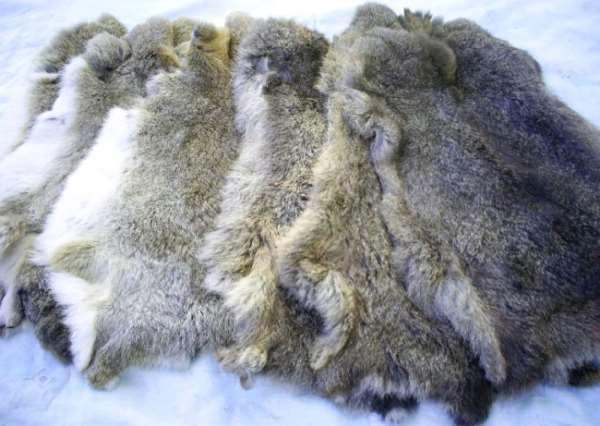 Шкурки кролика: на какие классы подразделяются?