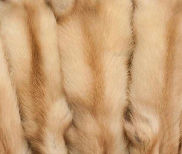 Шкурки куницы — универсальный и симпатичный мех