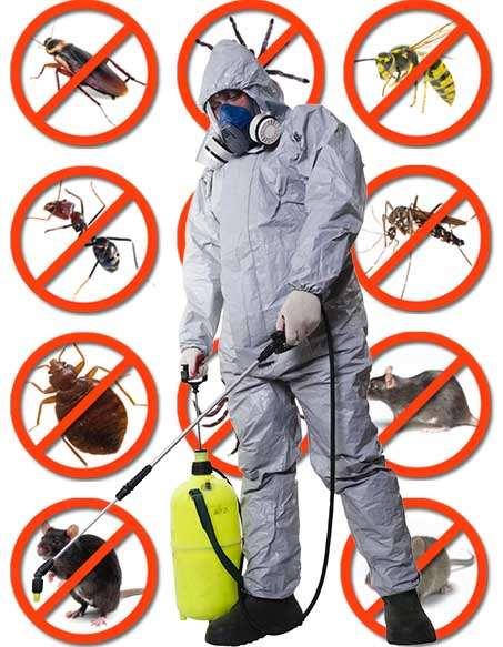 Услуги устранения грызунов, насекомых и паразитов из дома