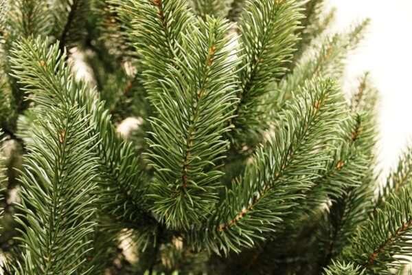 Советы по выбору искусственной елки