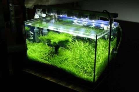 Популярные модели ламп для аквариума